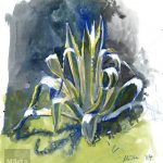 Agave , watercolour, pencils, crayons, aquarelle