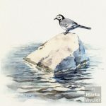 Bachstelze bird, oiseau, watercolor, aquarelle, bergeronnette, wagtail