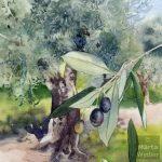 Olive et Olivier olive tree, aquarelle, crayons, watercolour, pencils