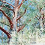 Printemps - lisière de la forêt watercolour, aquarelle, edge of the woods, pins, pine tree, spring, landscape
