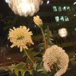 Piloselle-Pissenlit - on wood - 60x60cm mixed technique on wood, 60x60cm technique mixte sur bois, 60x60cm rose, flower, fleur, bees, abeilles, Märta Wydler, art